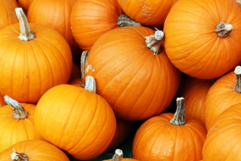 stonycreek-farm-pumpkin-harvest-festival-noblesville-in-lp